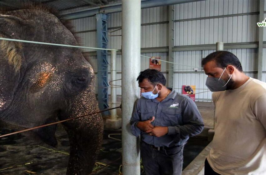 Yusuf Pathan visited Elephant Conservation Center and Elephant Hospital, see in pics