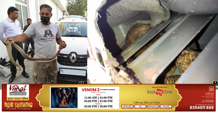 Video: Five feet long snake was sitting on the front seat of the car in Agra, rescued